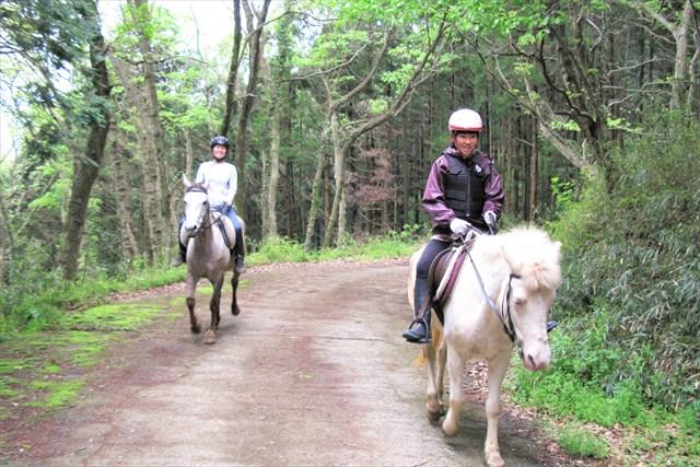 茨城・石岡市・乗馬(70分・森林浴を楽しみながら、のんびり林道外乗)