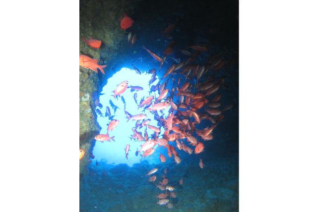 【沖縄・体験ダイビング】神秘のブルーワールドへ!青の洞窟体験ダイビング