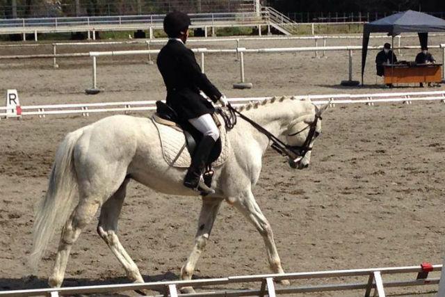 【群馬・前橋市・乗馬体験】馬とゆっくりふれ合える!初心者でも楽しめる乗馬体験