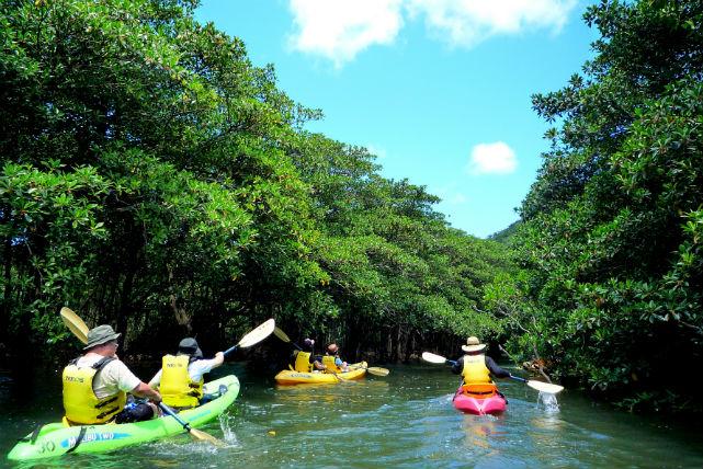 【西表島・マングローブカヌー】マリユドゥの滝を眺め、カヌー下りで水遊び!充実1日プラン