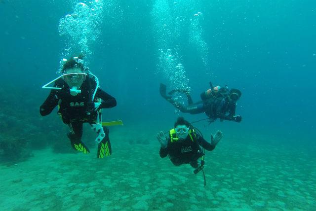 【島根県出雲市・体験ダイビング】「神々の海」に潜ろう!出雲大社のおひざもと日御碕で体験ダイビング