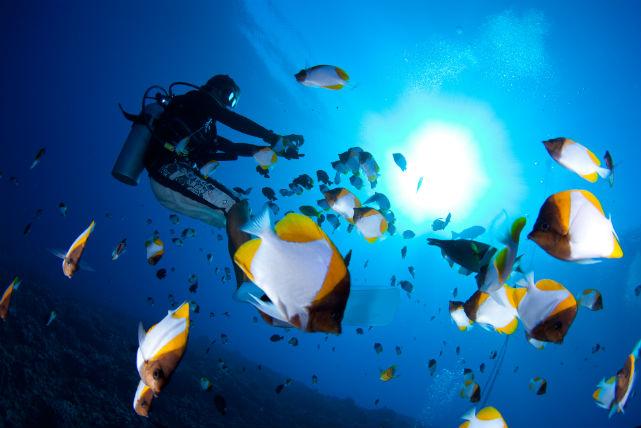 【名古屋・体験ダイビング】無重力の世界で魚たちとの交流が楽しめる!