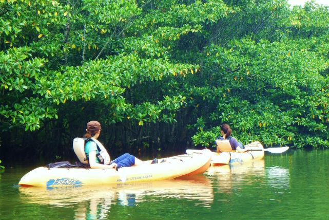 【西表島・カヌー】ユツン川とマヤロックの滝をめぐるジャングルピクニックプラン!
