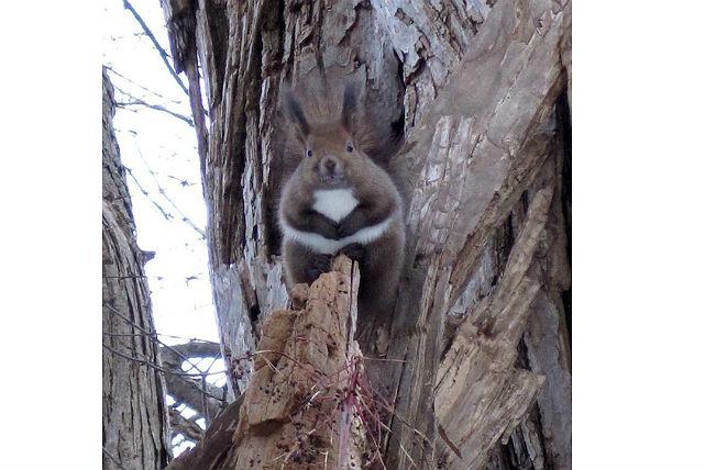 【札幌・スノーシュー】動物たちとの出会いも楽しい!スノーシューで札幌中心部の森を探索