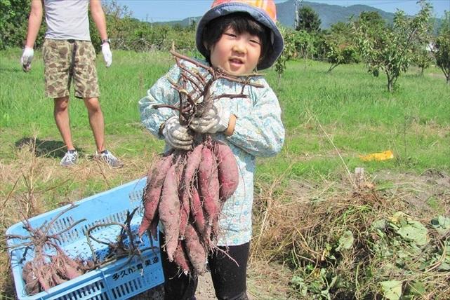 【佐賀県佐賀市・芋掘り体験】春はじゃがいも、秋はさつまいも!大きい芋を掘ろう!