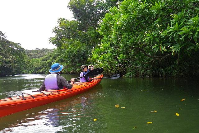 【西表島・カヤック】大迫力のマングローブ原生林を、カヤックで冒険しよう!