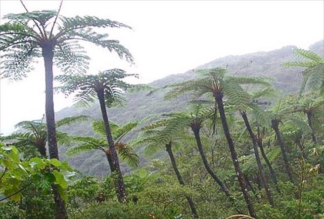 【奄美・トレッキング・3時間】太古の森!金作原原生林をベテランガイドとめぐろう