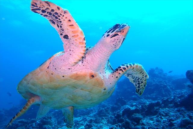 【埼玉集合・スキューバダイビング】水中世界を覗いてみよう。体験ダイビングに挑戦!