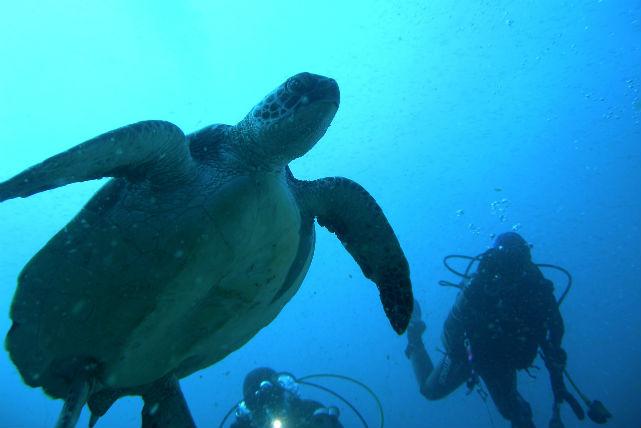 【柏島・ファンダイビング・3ダイブ】柏島の海を遊びつくす!たっぷり3Diveプラン(Cカード所持者)