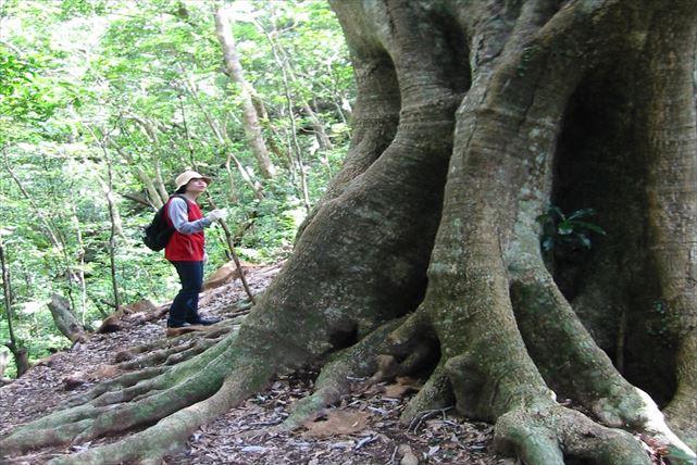 【沖縄・トレッキング】天然記念物の住む太古の森へ!伊部岳トレッキングプラン