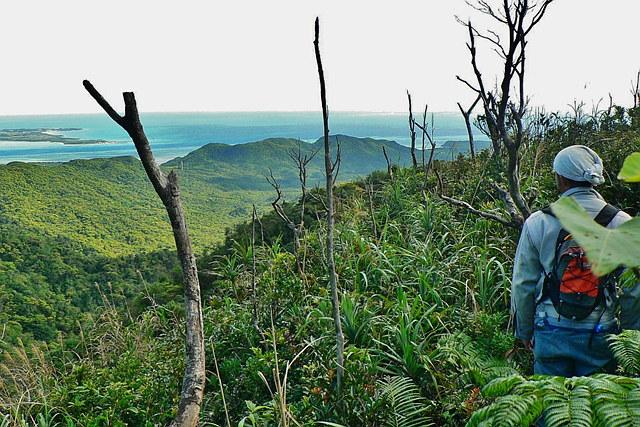 【西表島・トレッキング】西表島の最高峰、古見岳に挑むスペシャルツアー