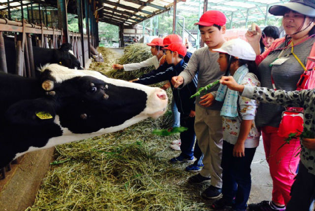 【静岡県富士宮市・牧場体験】エサやりや乳しぼり、バター作りを楽しめる!牧場体験