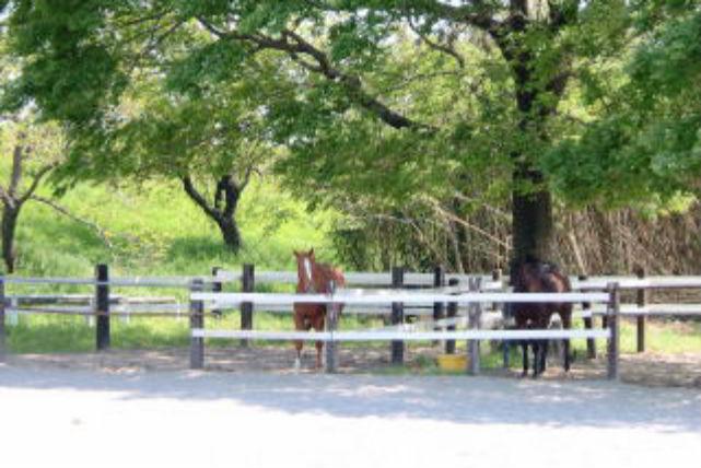 【静岡県浜松市・ポニー曳き馬】3歳から楽しめる!お子さまポニー曳き馬プラン