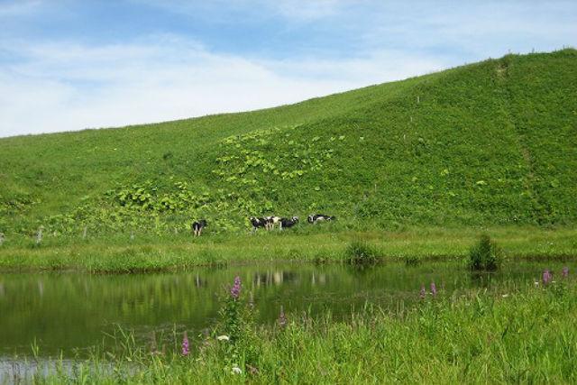 【北海道・根室・フットパス】野鳥のふるさとを歩く。別当賀フットパスフルコース