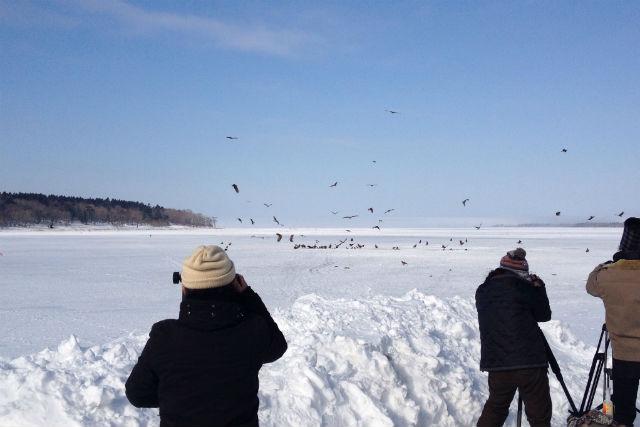【北海道・根室・バードウォッチング】野鳥の宝庫!風蓮湖をめぐる、野鳥ウォッチングツアー