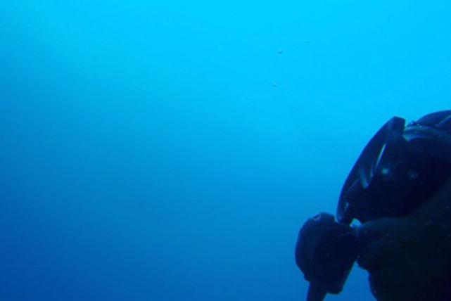 【屋久島・ファンダイビング】日本屈指の美しさ!屋久島で2ボートのファンダイビング
