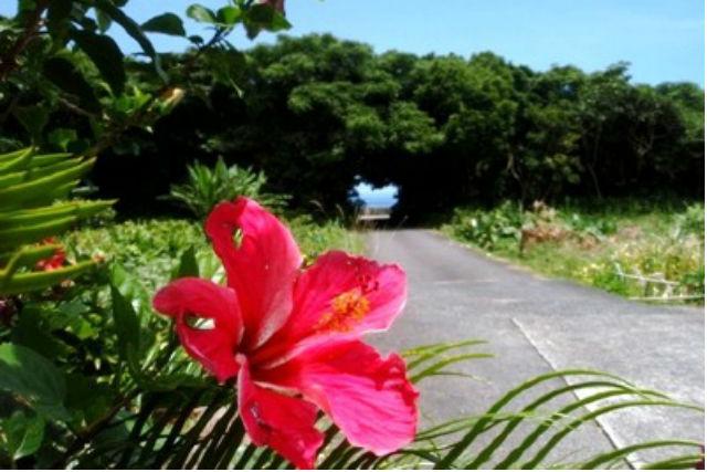 【屋久島・トレッキング】南国気分を味わいたい方へ!蛇之口滝トレッキングコース