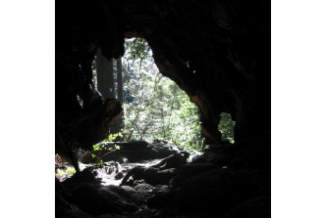 【屋久島・トレッキング】竜の形の屋久杉が見られる!竜神杉トレッキングツアー