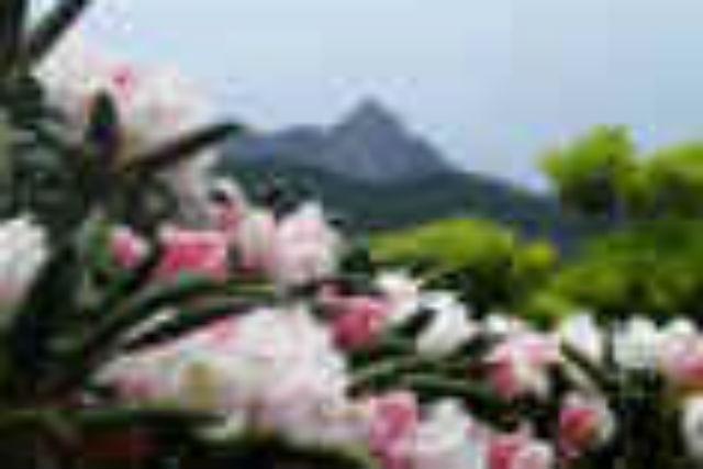【屋久島・トレッキング】2日で自然遺産を巡る!宮之浦、永田岳、花山原生林コース