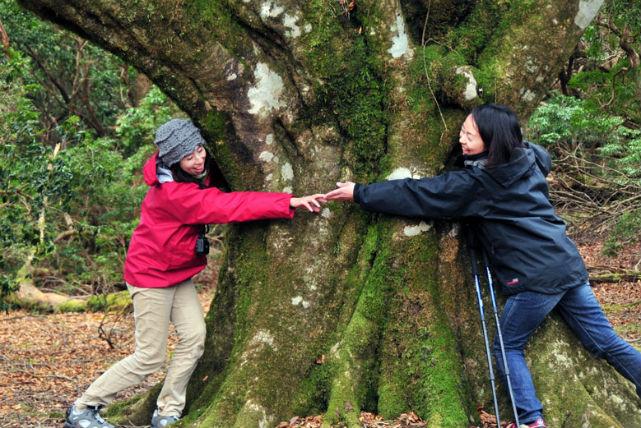 【静岡・トレッキング】樹齢300歳!「ブナ太郎」に会いに行く、ブナ原生林コース