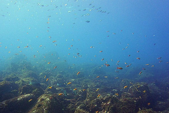【東京・体験ダイビング】ビギナー向け!美しい伊豆エリアの海で、魚と一緒に泳ごう!