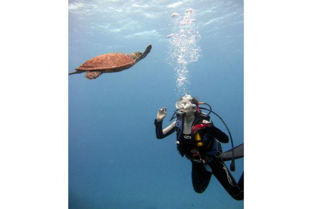 【座間味・ファンダイビング(1ダイブ)】海中の絶景、海底砂漠へご案内!1ダイブプラン