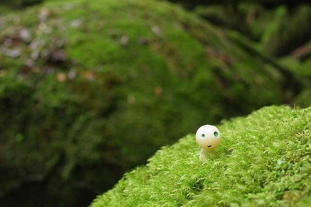 【屋久島・白谷雲水峡・半日ハイキング】もののけ姫の森を散策!白谷雲水峡半日ツアー