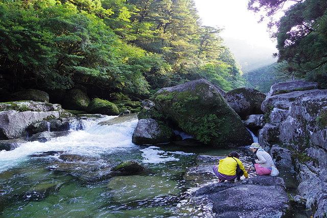 【屋久島・ヤクスギランド・半日ハイキング】屋久杉をお手軽に見に行こう!ヤクスギランド半日ツアー