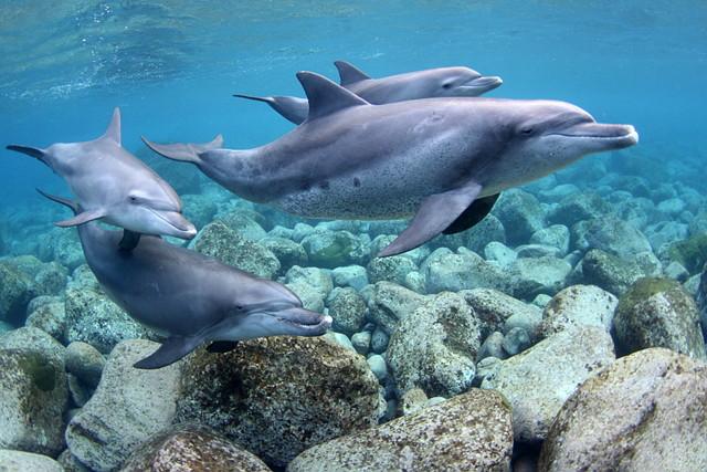 【竹芝発御蔵島・ドルフィンスイム・2泊3日】野生のイルカと泳ぐ夢を叶えよう!
