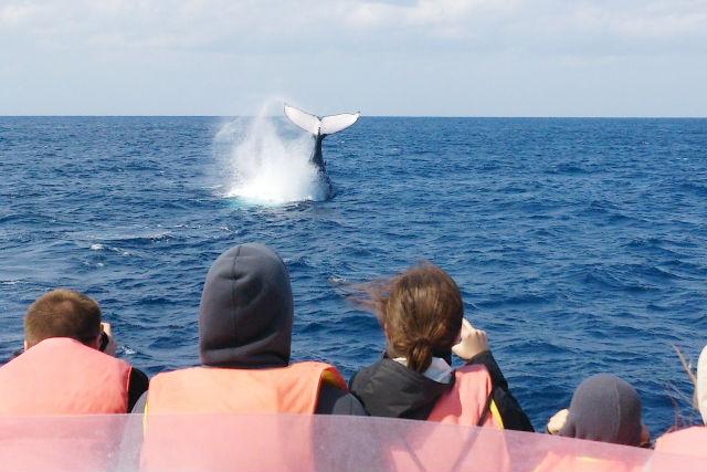【那覇・ホエールウォッチング】美ら海とザトウクジラのコラボレーションを堪能!