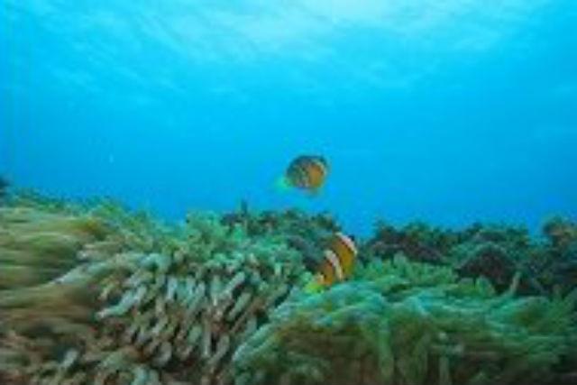 【和歌山県田辺市・2ボート・ファンダイビング】和歌山の海をのほほーんとダイビング