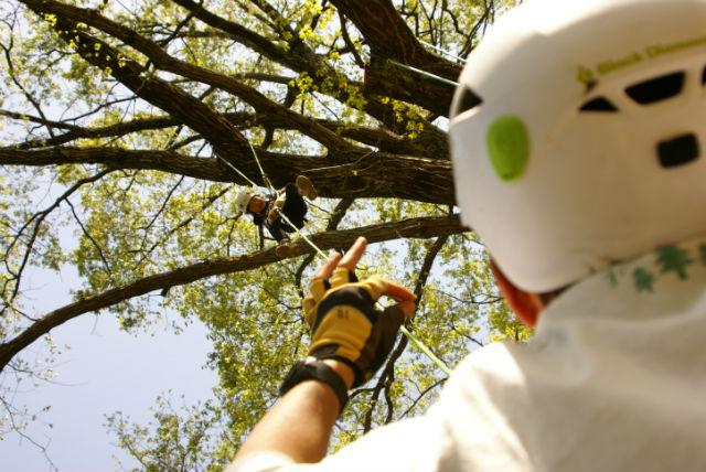 【兵庫県・木登り】大きな木の秘密基地へ!山陰海岸ジオパークで木登り体験プラン