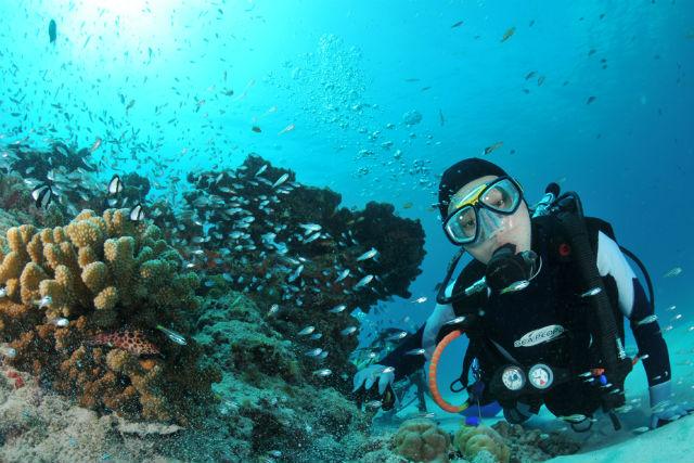 【高知県柏島・体験ダイビング】ダイナミックな高知の海を潜ってみよう!