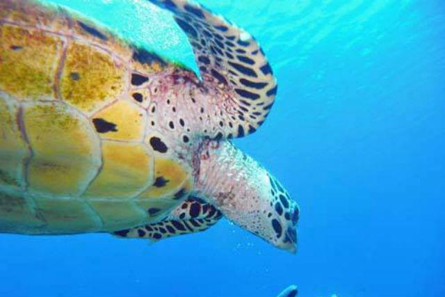 【大阪・日高・ファンダイビング】2種類ダイビングが魅力!ダイビングツアー(1ビーチ・1ボート)