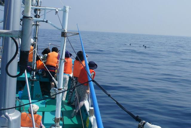 【和歌山・ホエールウォッチング】聖地とよばれる海で、迫力満点のクジラたちに会おう!