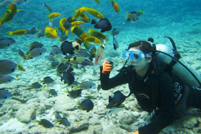【沖縄本島北部・ボート・体験ダイビング】沖縄最高の海へご案内!初心者歓迎の体験ダイビング