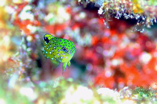 【慶良間・ファンダイビング】写真撮影、熱帯魚観察をじっくりと!ファンダイビング(3ボート)