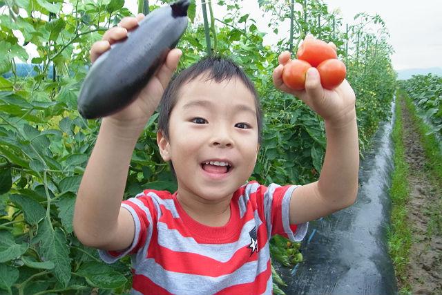 【山口・農業体験】とれたての野菜を、収穫して持ち帰れる!野菜狩り体験
