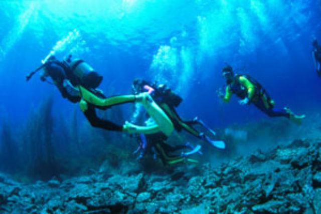 【隠岐の島・ファンダイビング】隠岐の島の海をじっくり散策!2ボートファンダイビング