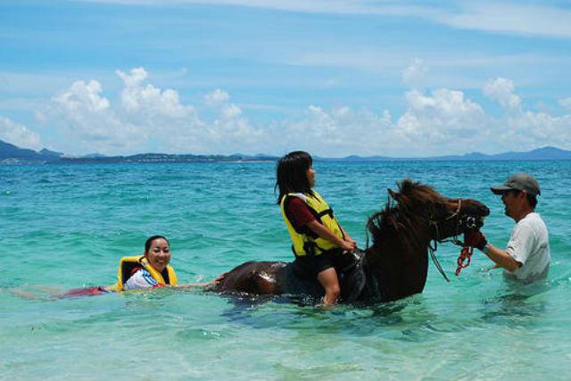 【沖縄県伊江島・乗馬体験】癒し系ホースセラピーの決定版!馬と泳ごうコース
