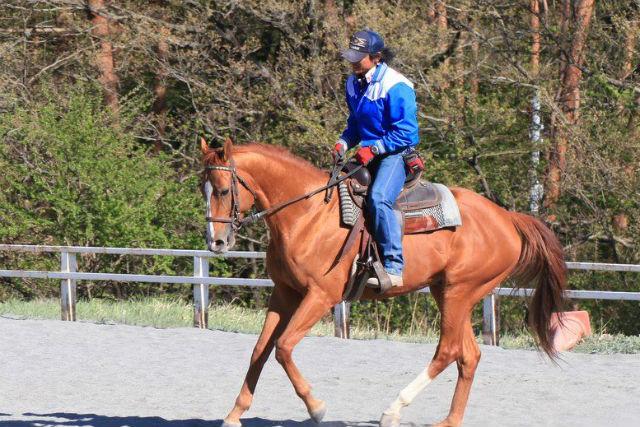 【山梨・小淵沢・経験者向け・乗馬体験】45分の乗馬体験!大自然の中で仲間と一緒に外乗へ