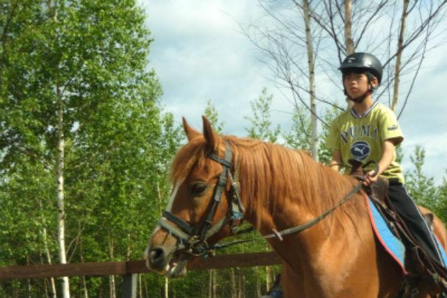 【美瑛・乗馬・2分】初めての乗馬に最適!サポートしっかりの曳き馬体験・シラカバコース