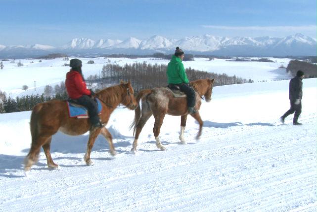 【美瑛・乗馬・フリー30分】「丘の町」で自由に乗馬を楽しもう!フリー騎乗プラン