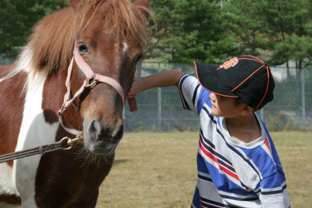 【広島・乗馬】初心者向け、1対1の個人レッスン!体験乗馬1回コース