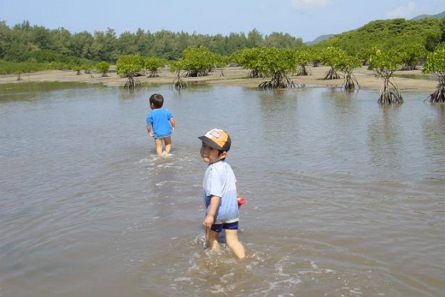 【石垣島・エコツアー】1日自然体験ツアー!石垣ジャングルへ冒険に出かけよう!