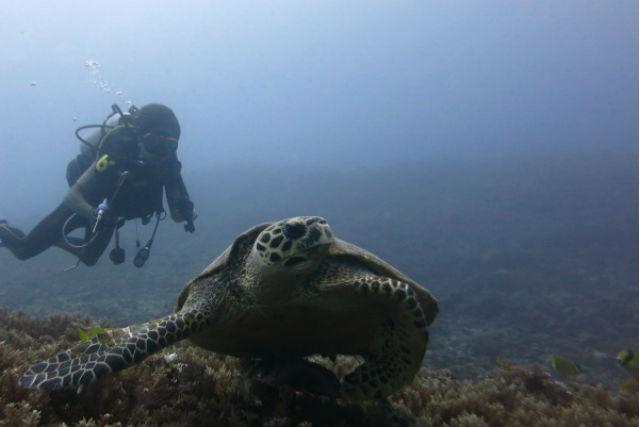 【西表島・ナイトダイビング】ナイトダイビングで新しい海を発見!(1ダイブ)