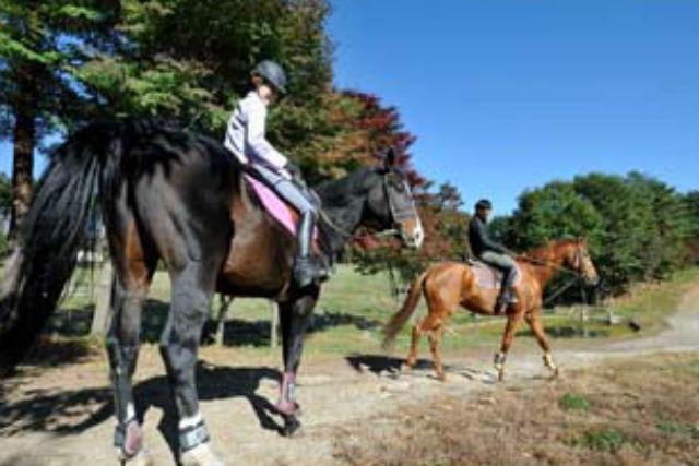 【小淵沢・乗馬体験・60分】経験者ならでは!自由な速度で外乗り乗馬を楽しもう!