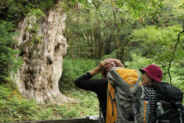 【屋久島・日帰り・トレッキング】森の守り神「縄文杉」に会いに行くガイドツアー!