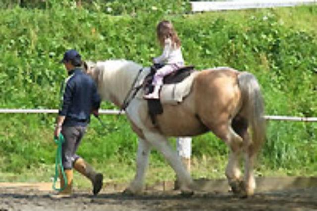 【伊豆・乗馬体験】乗馬初体験の方におすすめ!初心者向けの引き馬コース