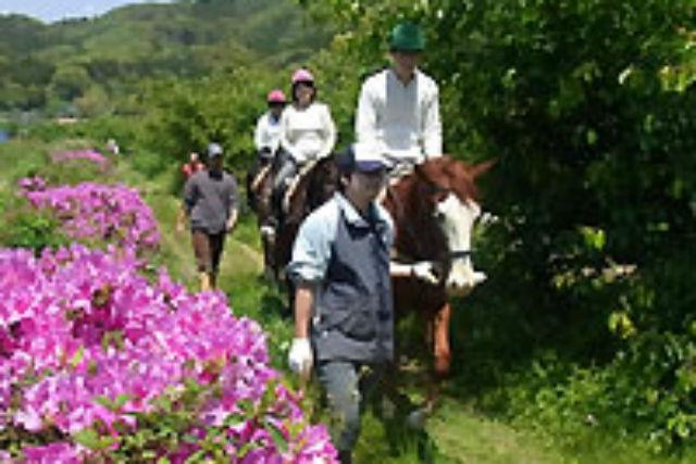 【伊豆・乗馬体験】のどかな自然を乗馬で堪能!初心者向けの外乗・田園コース